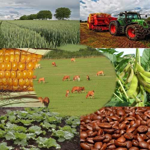 Uma grande empresa do setor Agropecuário com mais de 50 CNPJs, estava com uma grande falta de arquivos XMLs de fornecedores.